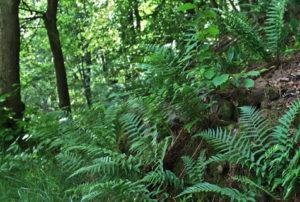 Stadtpark Hermelsbach Siegen ein Projekt der IVP